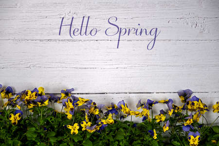 Background with white wooden wall in the lower third colored horned violets and text Hello Spring Stockfoto
