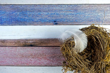 Background slightly out of focus painted in white, blue, brown and rose colored stripes. Top view of birds nest with airy white feather