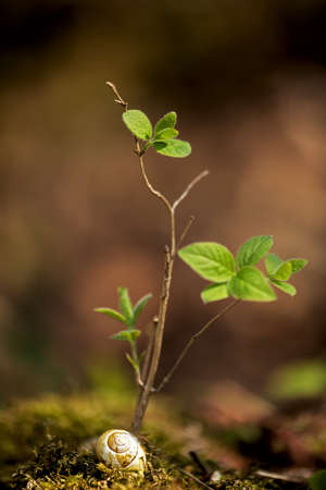 small bush with fresh green leaves in April, snail shell on the ground in the moss