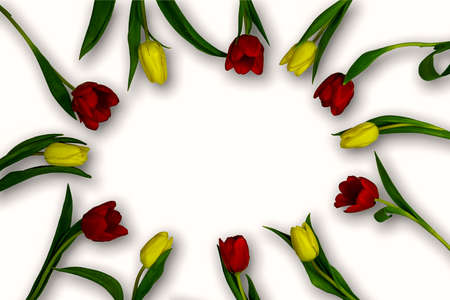 Spring tulip flowers on white background top view in flat lay style.