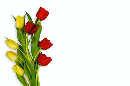 Four yellow and four red tulips arranged on the left side of a white background Stockfoto
