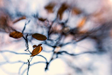 branch with autumn leaves, background in blurred motion