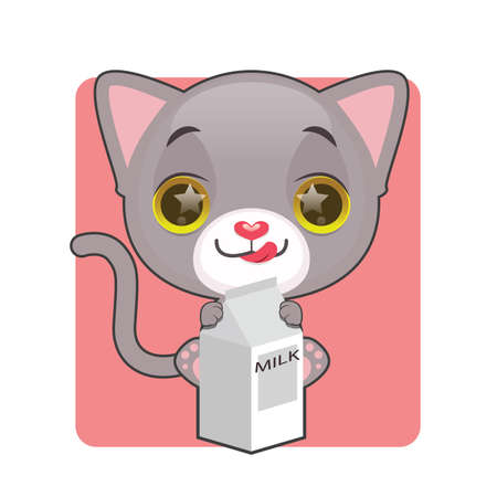 eager: Cute gray kitten being eager to drink milk