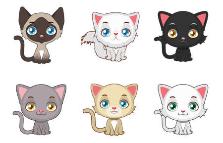 kitten small white: Cute cats variation