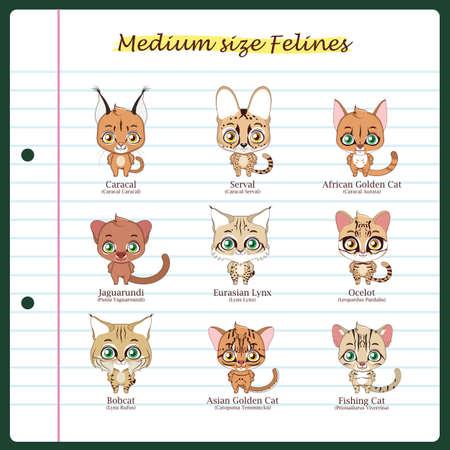Medium sized feline illustrations with regular and scientific names Illustration