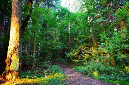 masuria: forest in the morning Stock Photo