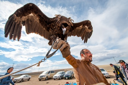 nomadism: MONGOLIA - May 17, 2015: Specially trained eagle for hunting in mongolian desert near Ulan-Bator. Editorial
