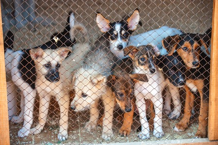locked in: Many cute puppies locked in the cage. Russia.