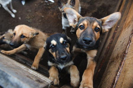 Many cute puppies locked in the cage. Russia.