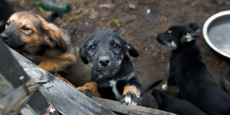 humane: Homeless puppies in the shelter in Russia