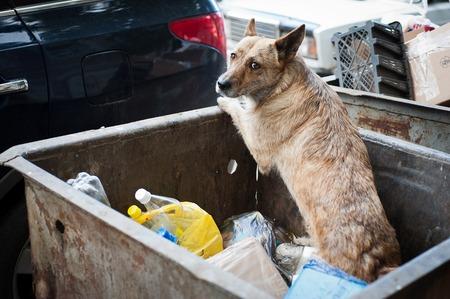 perro asustado: Perro busca de comida en un cubo de basura