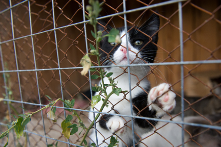 animal shelter: Animal Shelter Orphaned Pet. cat in cage.