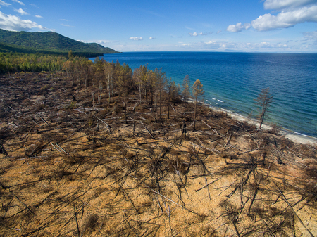 quemado: drone view of a burned forest near lake Baikal in Russia