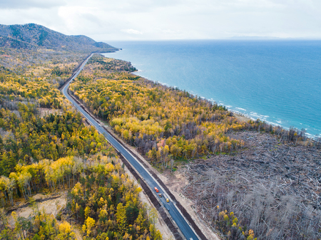 burned forest aerial view road nature tree