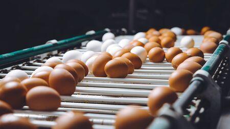 Eierfabrik Pflanzen Landwirtschaft Geflügel Hühnerfarm