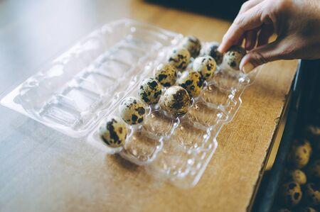 egg shell plastic worker sorting packaging quail