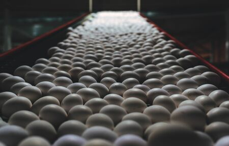 egg factory industry poultry conveyor production line