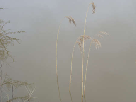 Gracious wild plants in the river , natural background
