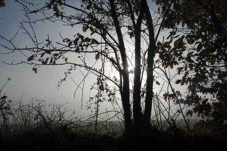 Countryside landscape with fog in autumn, white sun, cold feeling, seasonal background
