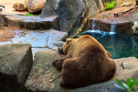 Grizzly Bear taking a nap by the stream