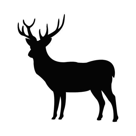 stag horn: Deer