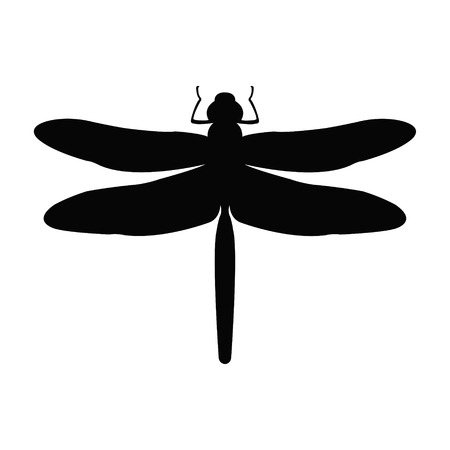 black and white dragon: Dragon-fly