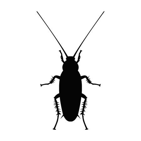 roach: Cockroach