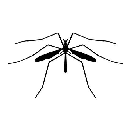 Crane-fly Vector