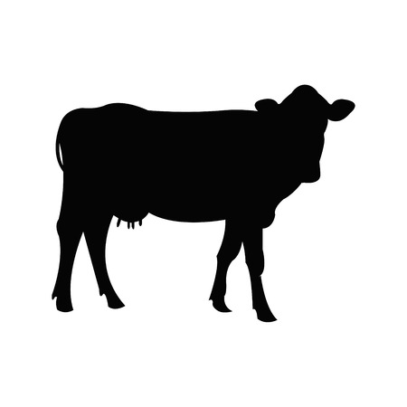 calas blancas: Vaca Vectores
