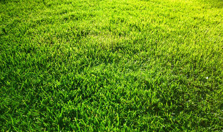 Background with fresh green grass photo
