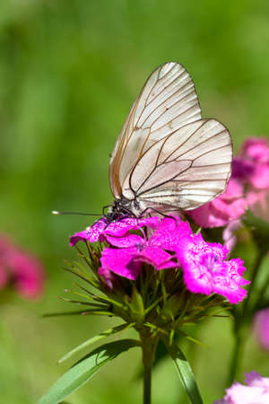 Macro view of butterfly on a flower photo