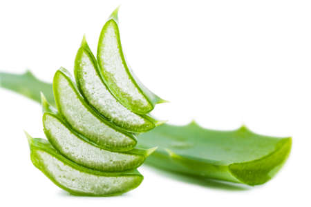 Closeup view of fresh succulent leaf of aloe