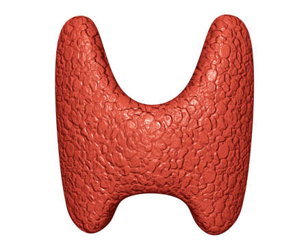 Thyroid gland on white background. Clinical evaluation of the endocrine system. 3D illustration