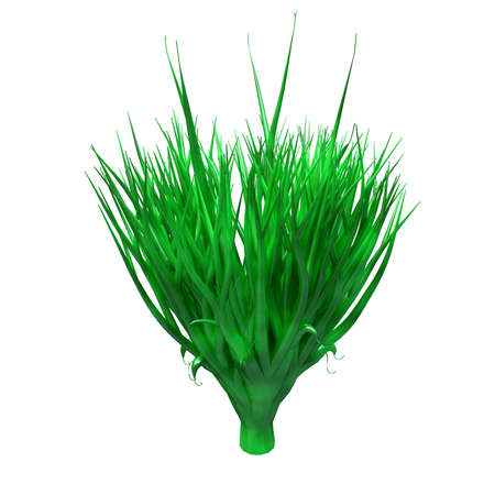 Spirulina plant, underwater algae, rich in protein and powerful antioxidant. Seaweed isolated on white background. 3D Rendering Stock Photo