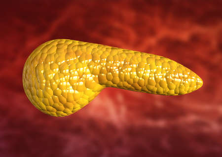 pancreas, human body organ isolated on scientific background. 3D rendering