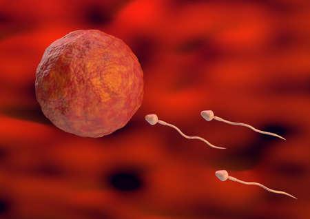 Los espermatozoides hacia el óvulo dentro del útero en la fertilización natural. Ilustración 3d sobre fondo orgánico Foto de archivo