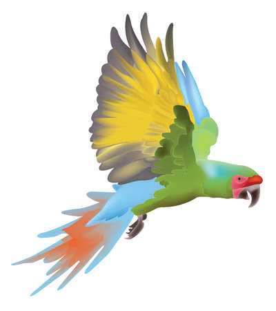 Macaw parrot flying over the jungle.