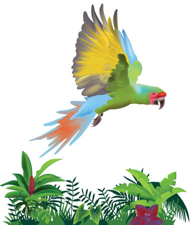 Macaw parrot flying over the jungle. Macaw bird.
