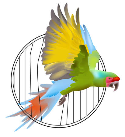 Macaw parrot flying out of the cage. Vector bird.
