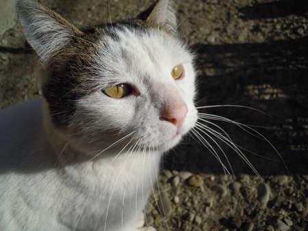 naso: Gatta bianca