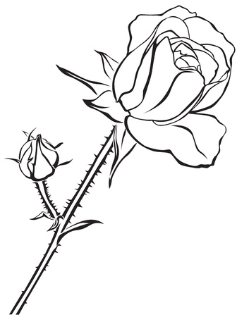 The contour image of a rose flower