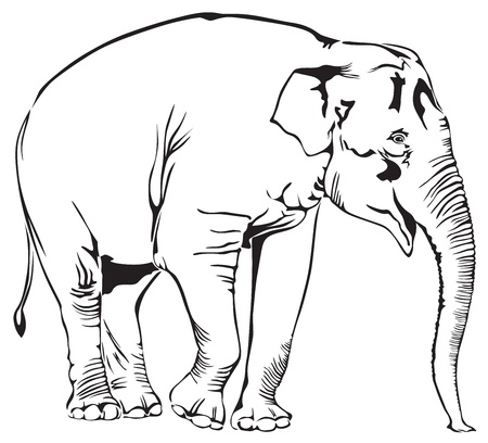 The contour image of a standing elephant