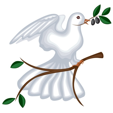 The white pigeon is sitting on a branch your wings and holding the olive branch in its beak Vector