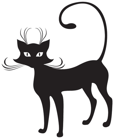 graceful: The silhouette of black graceful cat