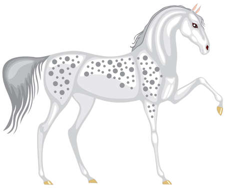dappled: A beautiful gray in the dappled horse is lifted up his leg and beautiful arching neck
