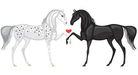 caballo negro: Caballo blanco y el negro se inclin� para los dem�s