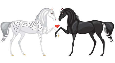 White and black horse bent to each other