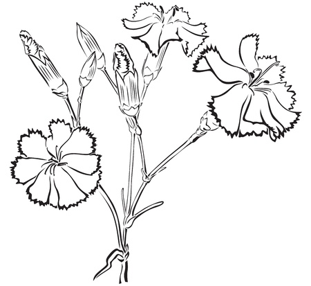 The contour image of beautiful bouquet of carnations Vector