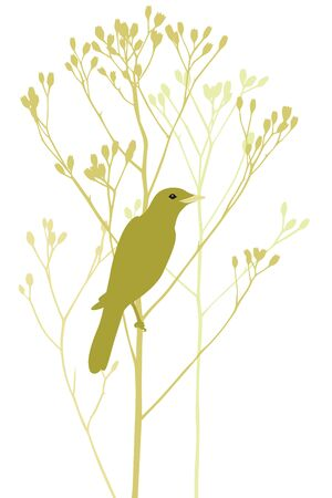 dry grass: The bird is sitting on a dry blade of grass Illustration