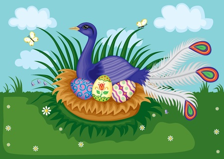 Beautiful paradise bird sitting on a nest with easter eggs Stock Vector - 12479772